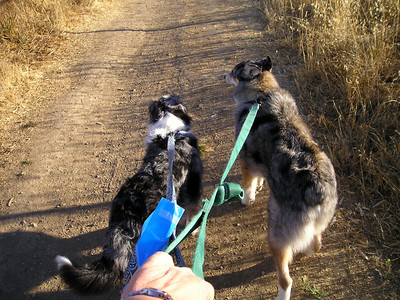 The trail headed UP immediately. Boost and Tika didn't care; they were ready to pull go pull go pull go go GO!