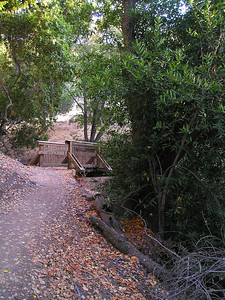 A little further along, now into the mixed-oak woodland, this bridge crossed another dry streambed.