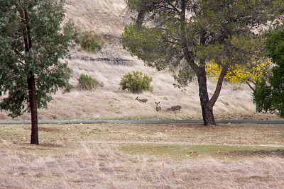 These were the only deer I saw, and they watched the dogs carefully from a long way off. As soon as we started in their direction, they took off over the hill.