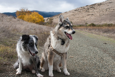 Boost and Tika were willing to pose.
