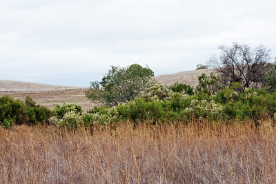 Even when the far horizon is invisible, the old grass and flowering shrubs make a nice scene.