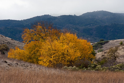 Loved the orange-yellow against the blue of the distant coastal range.