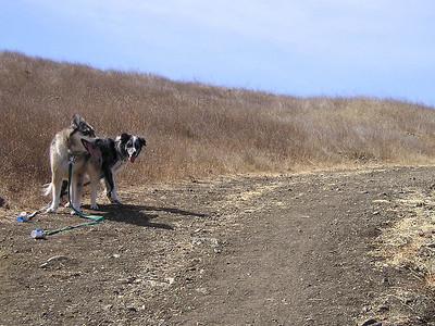 The good girls wait for their slower uphill Human Mom.