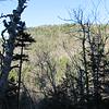 Flume Peak from Old Skidder Trail