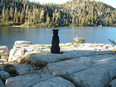 Zen Doggy