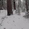 Video - More Snow