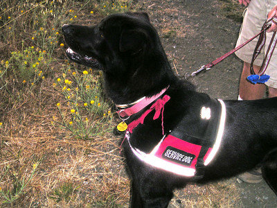 """Rhubarb (""""Rhu""""), the wonderfully sweet mixed-breed assistance dog, senses that there is Something Out There."""