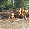 Piles of logs I went by on the Tim Pond Road on my way to Cupsuptic Snow Mountain.