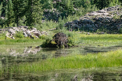 Another Beaver Lodge