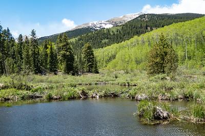 More Beaver Ponds and Spring Aspens