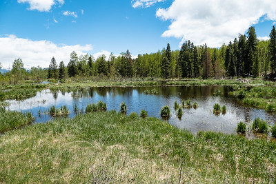 Another Beaver Pond