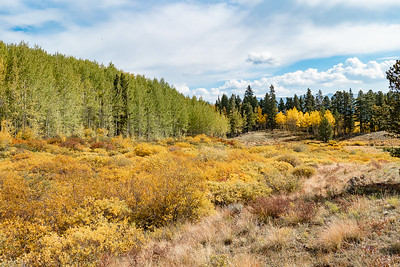 Fall Color Willows