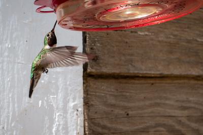 St Elmo Hummingbird