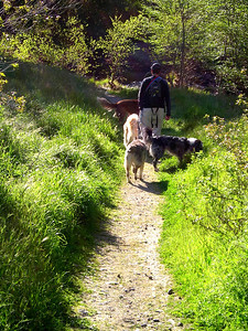 The dogs needed to be sure that whoever was in the lead wasn't leading us astray.