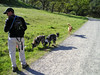 Keith the waterboy carries libations for the dogs. Tika and Boost, carrying nothing, look for more dead toads to roll in.