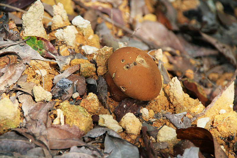 Tai Lam Country Park, MecLehose Trail Section 9, Mushroom
