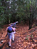 Leaves littered the trail, although the trees didn't look particularly autumnal. We climb steadily for 2 hours. Two hikers give up and turn back.