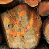 A happy logger's output