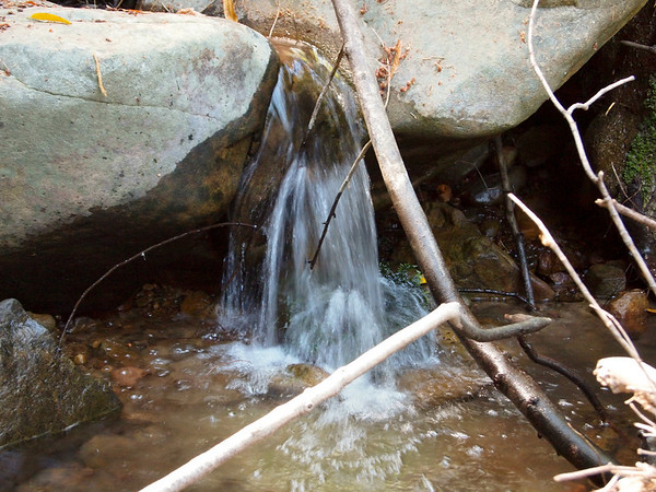 Along Swanson Creek.