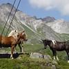Im Hintergrund die Berge des Arlberggebietes.