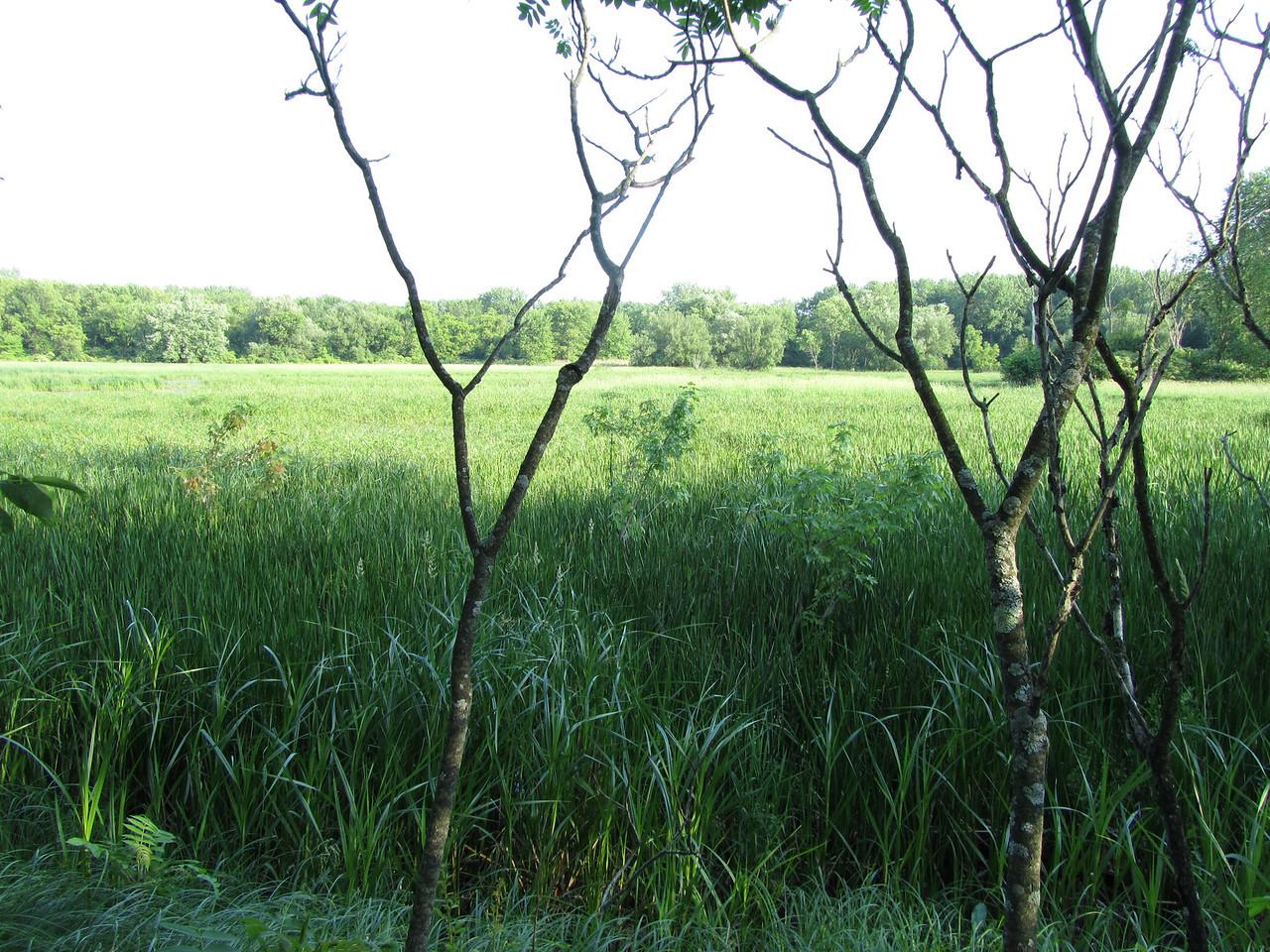 African grass lands.