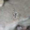 Writin' Spider