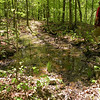 Stagnant water hole along the path to Hemlock Falls. mushy muddy