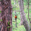 A robin sits in the tree outside our camper.