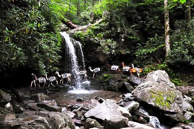 Great Smoky Mountain Waterfalls