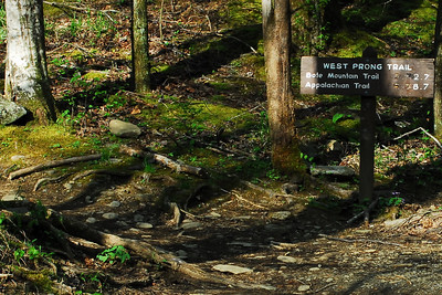 West Prong Trail to Campsite 18