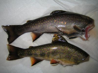Wildcat Brook_August 19 2008