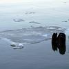 Ice floe in the Hudson, February 1, 2009.