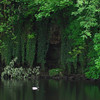 A blurred duck swims on the Ure just above Aysgarth upper falls.  Even after living in Askrigg for more than a year, I never understood why the river in Wensleydale is called the Ure.