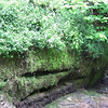 Another of Wendy's special places: the fairy grotto just below Mill Gill waterfall, all mossy and ferny and dripping with damp