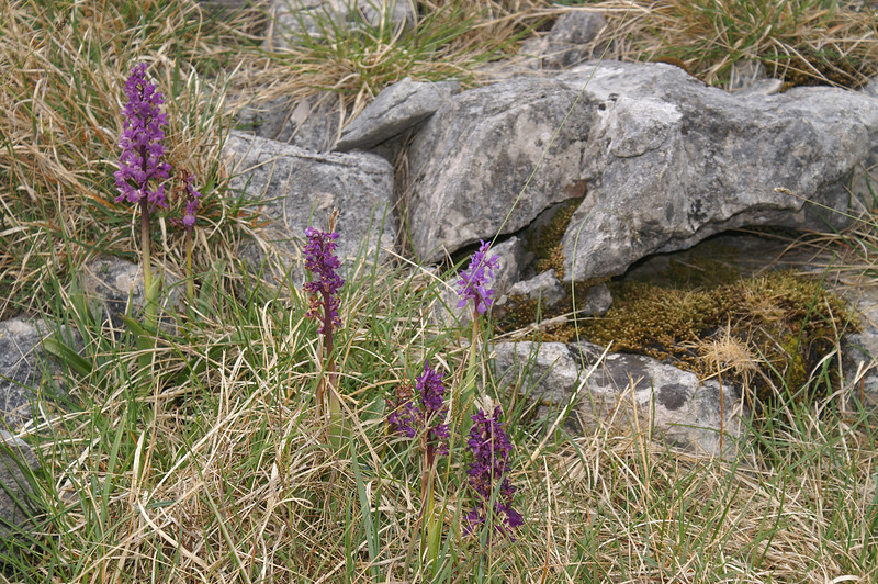 Cluster of orchids above Horton