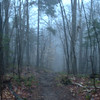 the Hale Brook Trail