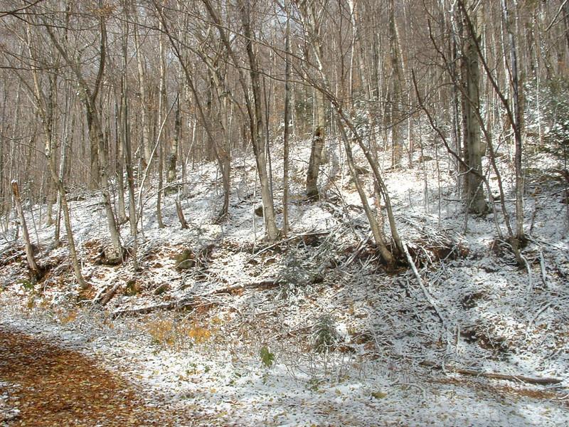 Livermore Trail