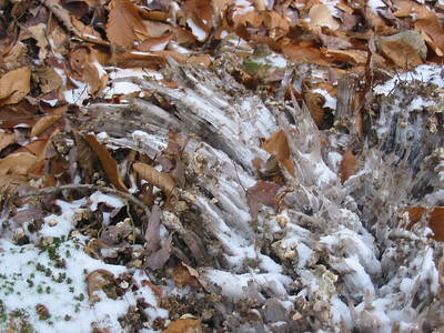 Ice dendrites on Nancy Brook Trail