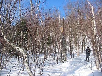 Slopetastic in a birch glade