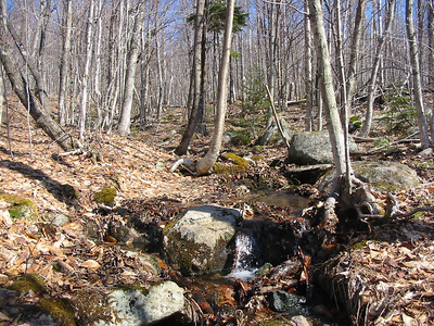 Running water and open woods