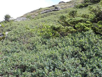 Scrub near the summit
