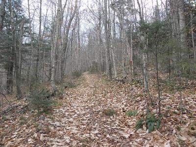 The trail near the Falls spur