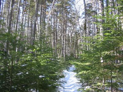 East Pond Trail