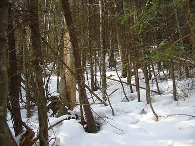 Decent woods at first...