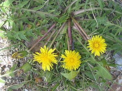 Wildflowers :-)