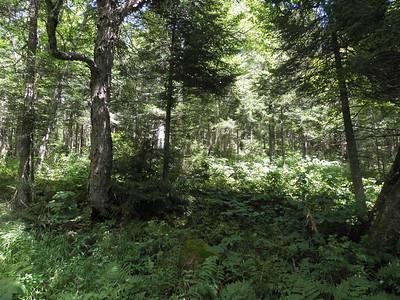Sweet bushwhacking woods