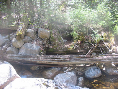 Old logging bridge