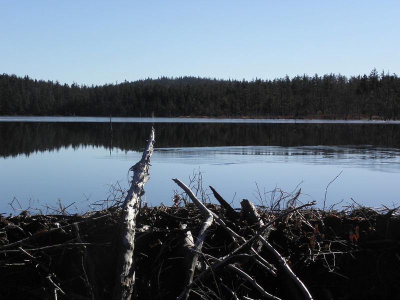 Beaver dam and skims of ice