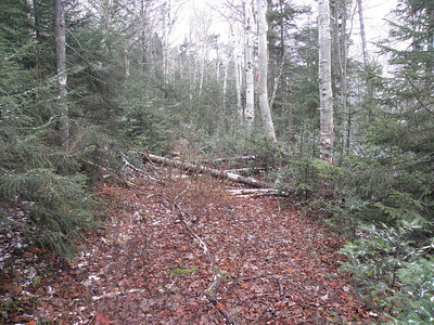 Logging road on the NW side