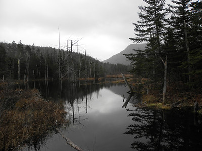 One of the beaver ponds